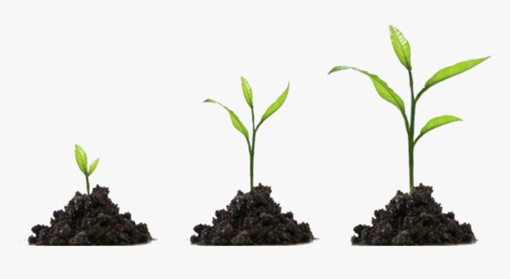 5. estrategia de inbound marketing nutricion de leads